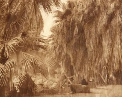 CS_Under the Palms- Cahuilla