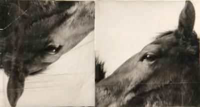 DMS_Horses(ICA)_1985