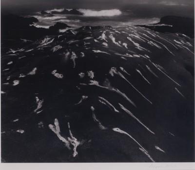 MW_BirdlimeandSurfPointLobosCaliforina_1951