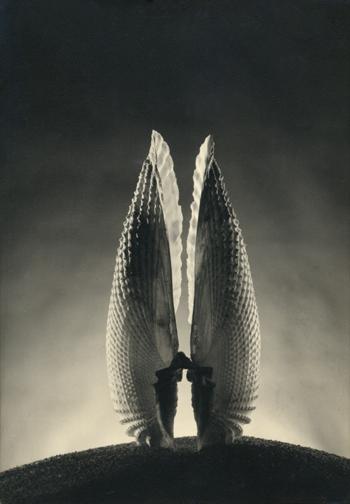 Ruth Bernhard, Angel Wings, 1943