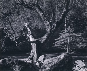 Ansel Adams 1902 1984 Scott Nichols Gallery