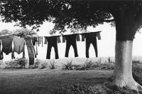 George Tice, Amish Clothes Line, Lancashire, Pennsylvania, 1966