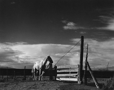 Paul Strand, White Horse, Rancho De Taos, New Mexico 1932