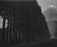 Johan Hagemeyer, Eucalyptus, Carmel, 1939