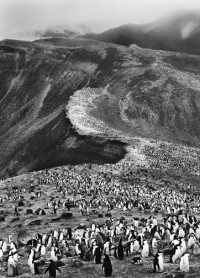 Sebastiao Salgado, Colony of Hundred of Thousands Chinstrap Penguins, Antarctica, 2005
