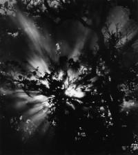 Brett Weston, Sunburst, Hawaii, 1978