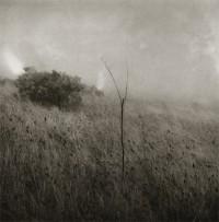 Unai San Martin, Grass in the Fog