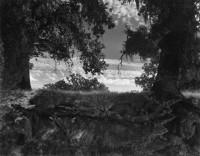 Wynn Bullock, Twin Oaks, 1956