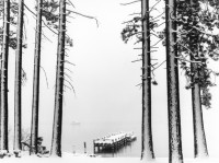 Robert Dawson, Trees and Pier in Snowstorm, Lake Tahoe, California, 1998