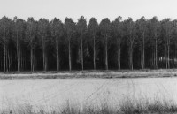 James Nicholls - Forest, Agen, France, 2000