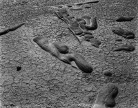 Concretions, Salton Sea 1938