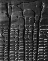 Edward Weston - Eroded Plank from Barley Sifter, 1931