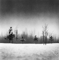 Michael Kenna, Small Trees, Anchorage, Alaska, 1989