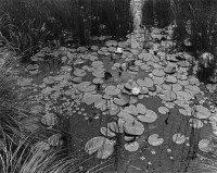 George Tice, Aquatic Plants #1, Saddle River, New Jersey, 1967
