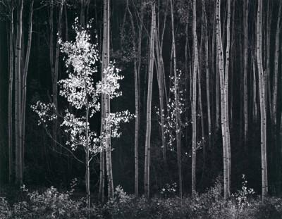 Ansel Adams, Apsens, Northern New Mexico 1958