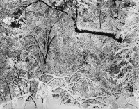 Ansel Adams, Fresh Snow, Yosemite Valley, California, 1947