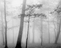 Mark Citrit, Trees in Fog, Crabtree Meadows, Blue Ridge Mountains, 1973