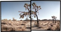 Michael Rauner, Hidden Valley, Joshua Tree National Park, 2004