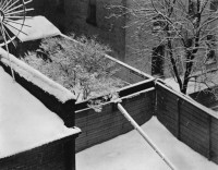 Paul Stand, Snow, Backyard, New York, 1914