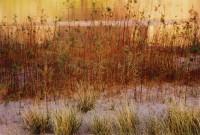 Eliot Porter: Intimate Landscapes