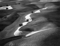 Eight Trees On A Hill, Paso Robles, California, 1979