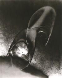 Untitled, Circa 1950-1960