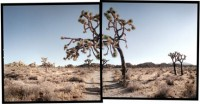 Michael Rauner, Hidden Valley, Joshua Tree National Park, California, 2004