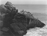 Seal Rocks 1937