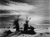 Brett Weston, White Sands, New Mexico 1947