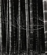 Brett Weston, Bamboo, Japan, 1970