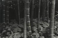 Yoshiro Soga, Bamboo, Kyoto Japan, 1971