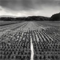Rolfe Horn, Rice Field, Yamagata, Japan, 2008