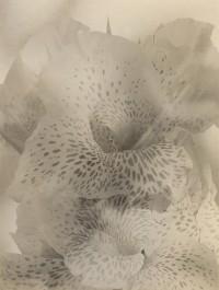 Lily, Circa 1950s