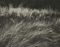Ansel Adams, Grass, Yosemite Valley, 1941