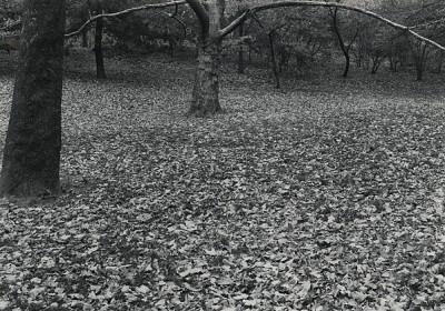 Lynn Stern, Forebodings #66 (Central Park, New York City)