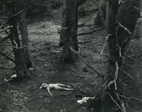 Wynn Bullock, Woman and Dog in Forest, 1953
