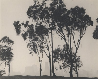 William E. Dassonville, Trees, San Francisco, circa 1920