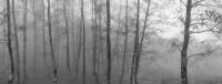 Pentti Sammallahti, Monte Sacro y Gelbison, Campania, Italy (Forest in Mist), 1990