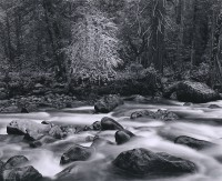 John Sexton, Merced River And Forest, Yosemite Valley, California, 1983