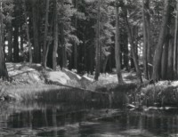 Ansel Adams, Lodgepole Pines, Lyell Fork Of The Merced River, Yosemite National Park, California, circa 1923