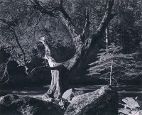 Ansel Adams, Morning, Merced River Canyon, Yosemite Valley, 1950