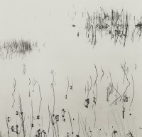 Ryuijie, Reeds, 2005