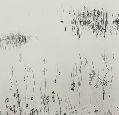 Ryuijie, Reeds, 2005