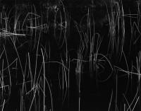 Brett Weston, Reeds, Oregon, 1975