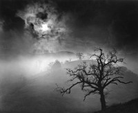 Wynn Bullock, Stark Tree, 1956