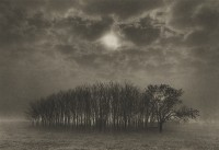 Dan Burkholder, Stand of Trees, Texas, 1989
