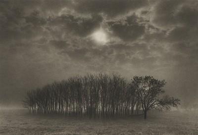 Dan Burkholder, Stand of Trees, Texas, 1989