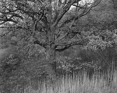 George Tice, Oak Tree, Holmdel, New Jersey, 1970