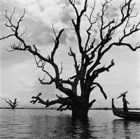 Tamarind, Burma, 2004