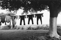 George Tice - Clothes Line, 1966